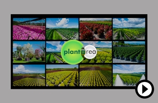 plantarea video